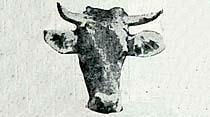 inekler sutyen takmaya başladı