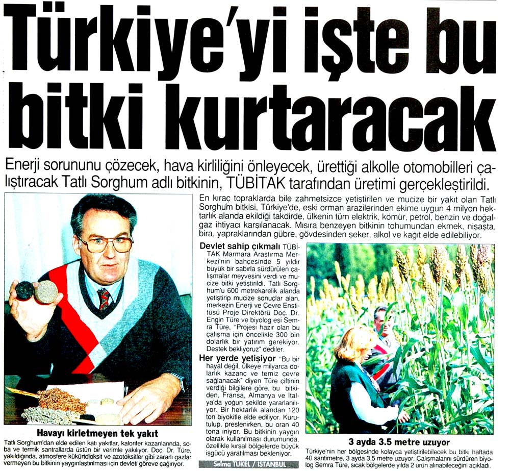 Türkiye'yi işte bu bitki kurtaracak