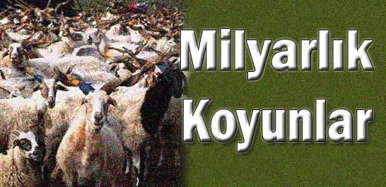 Milyarlık koyunlar