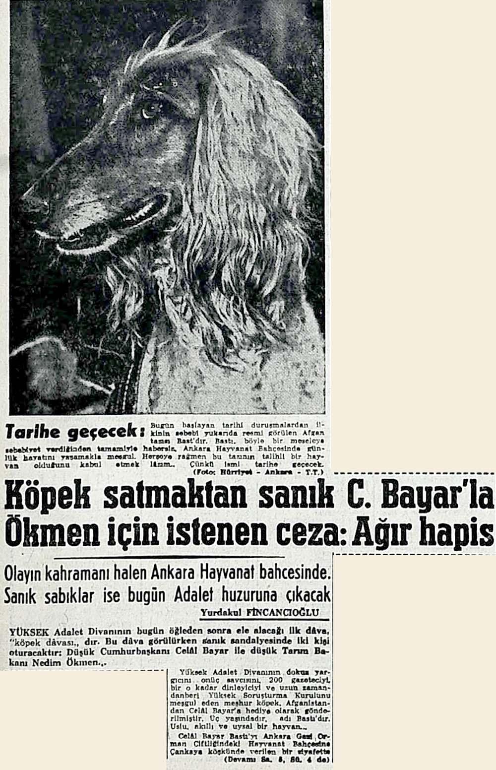 Köpek satmaktan sanık C.Bayar'la Ökmen için istenen ceza: Ağır hapis