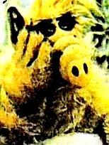 """""""Alf""""in başına gelenler"""