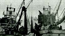 İstanbul Balık Hali lüferle dolup taşıyor