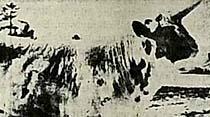 Tek boynuzlu inek ve öküz yetiştirildi