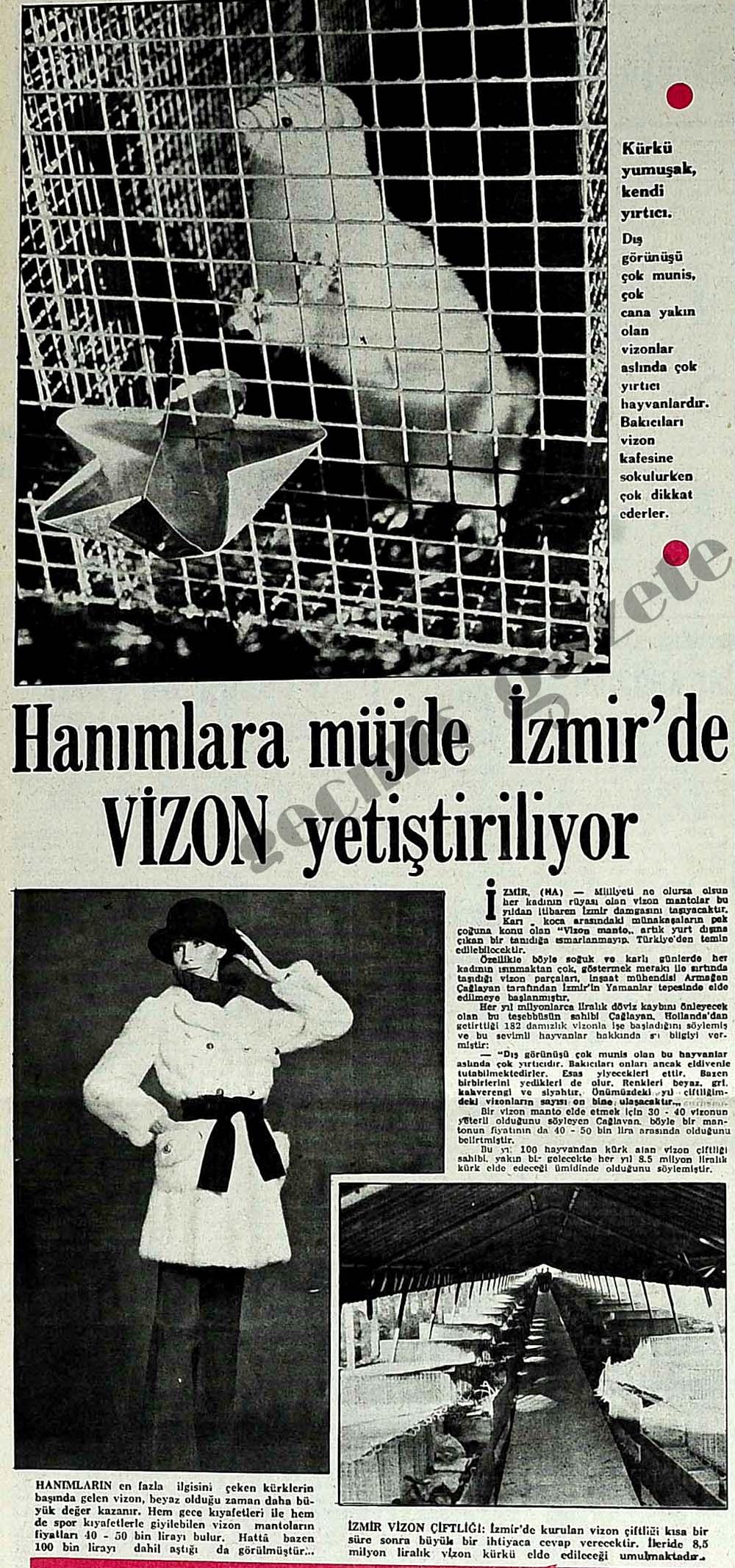Hanımlara müjde İzmir'de VİZON yetiştiriliyor
