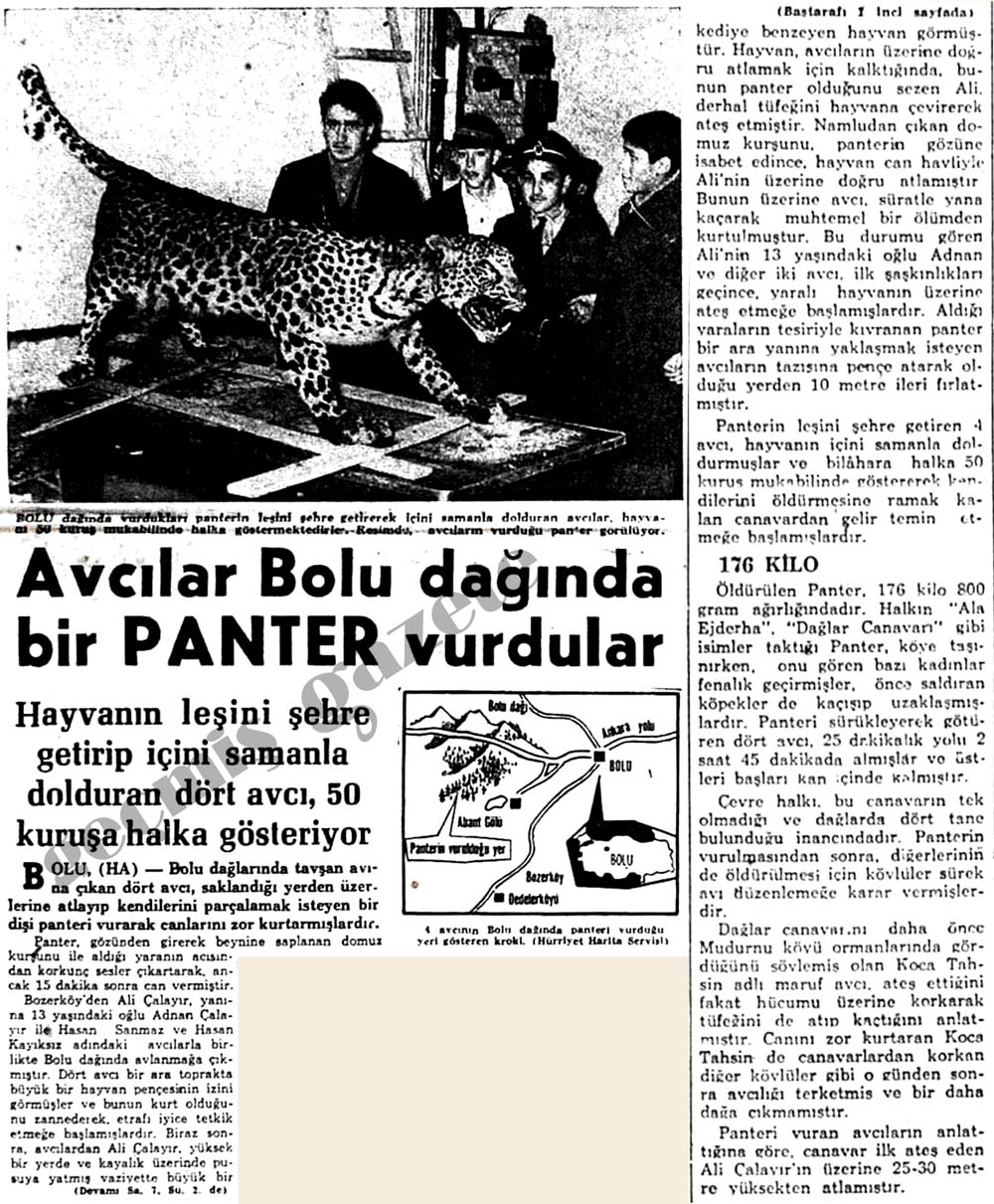 Avcılar Bolu dağında bir Panter vurdular