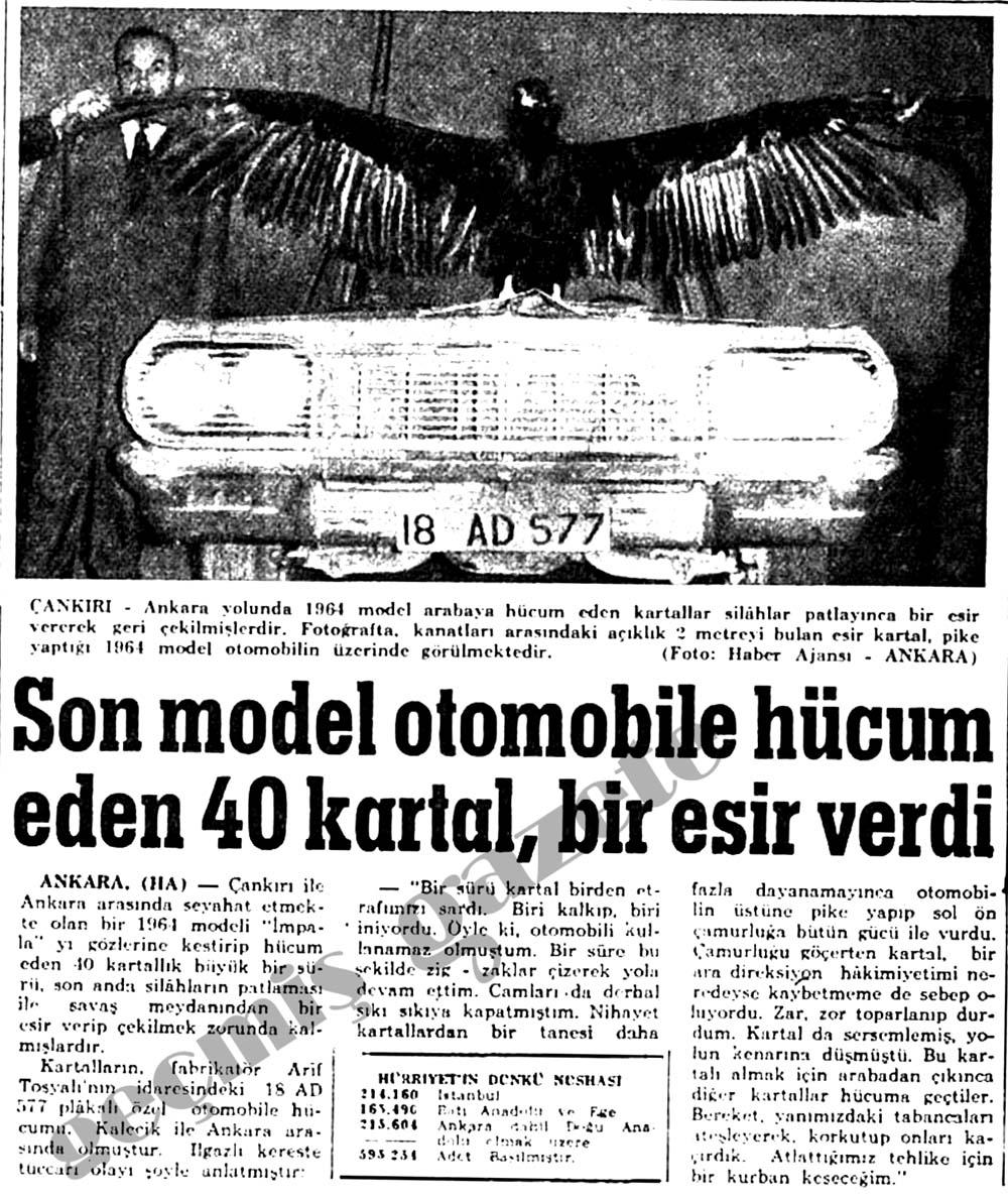 Son model otomobile hücum eden 40 kartal, bir esir verdi
