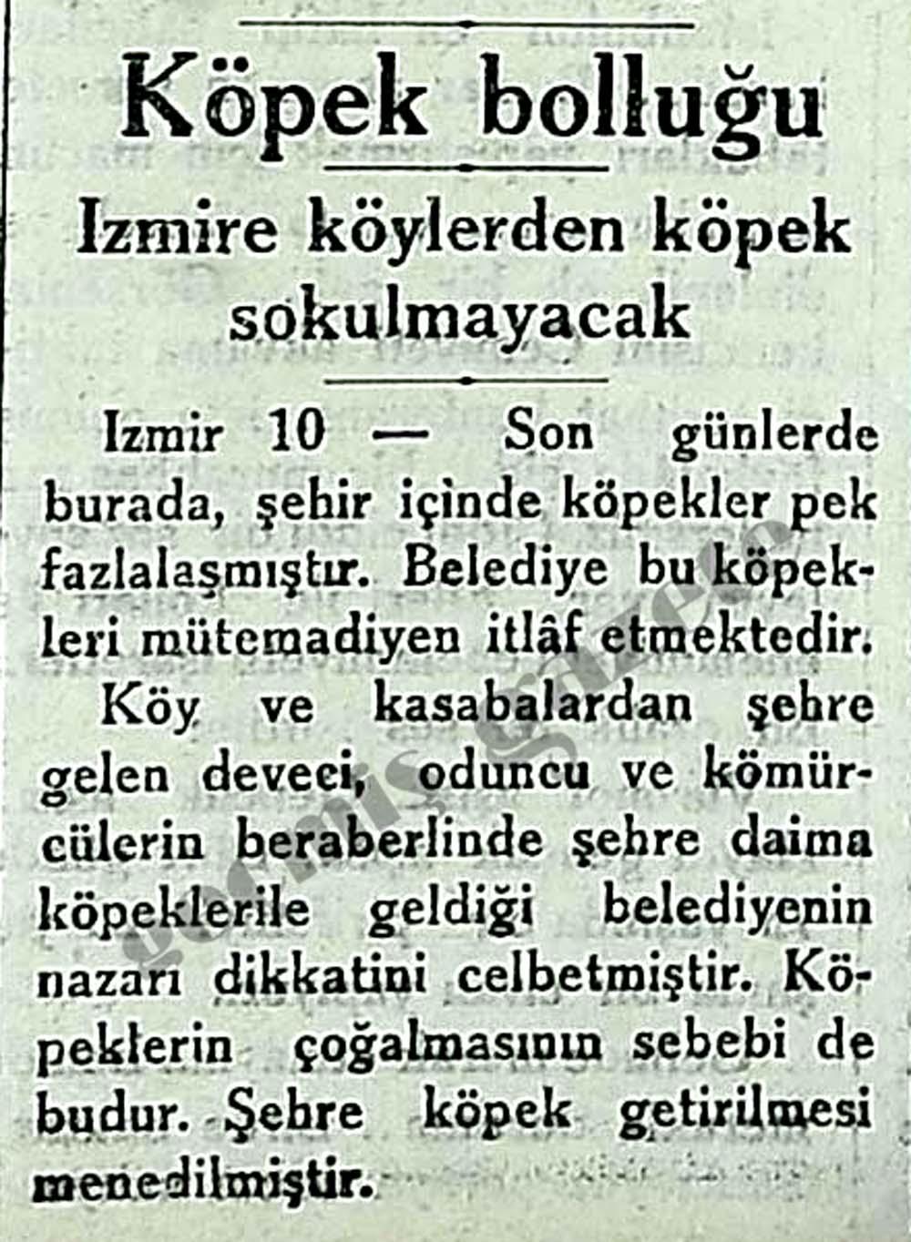 İzmire köylerden köpek sokulmayacak