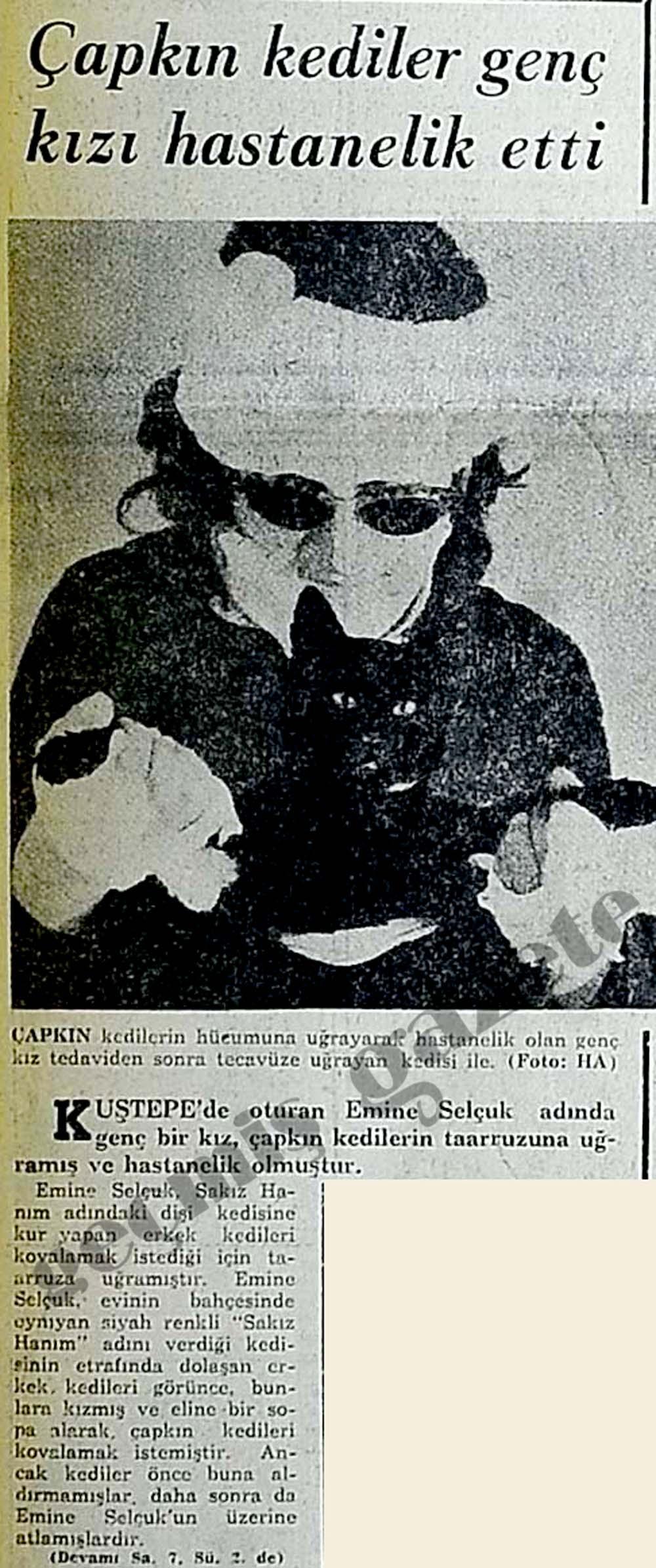Çapkın kediler genç kızı hastanelik etti