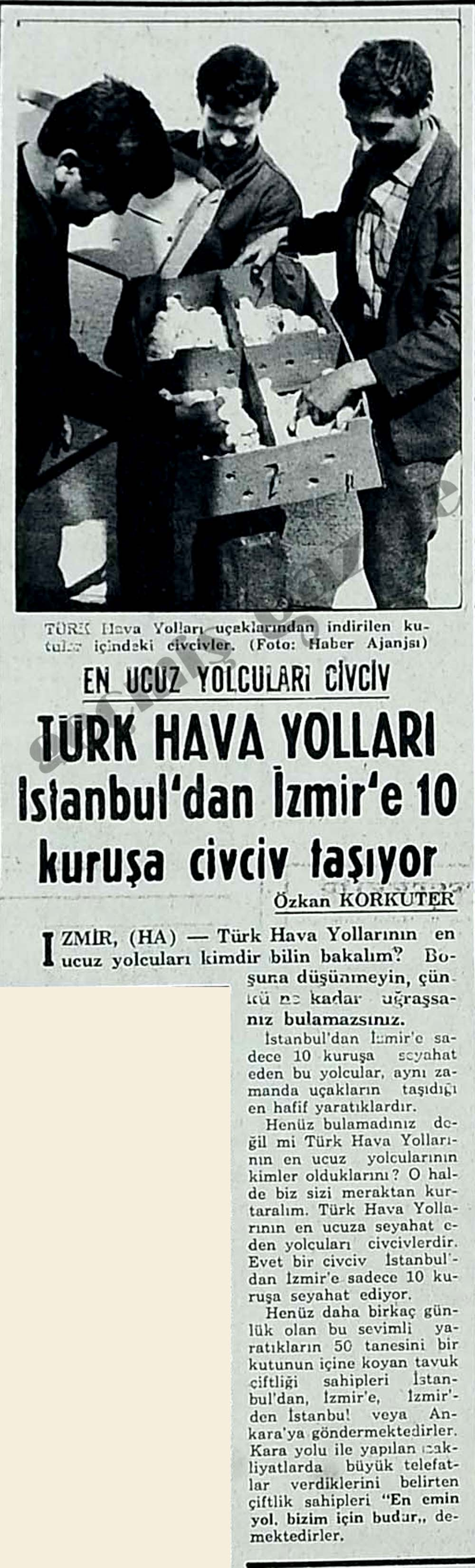 Türk Hava Yolları İstanbul'dan İzmir'e 10 kuruşa civciv taşıyor