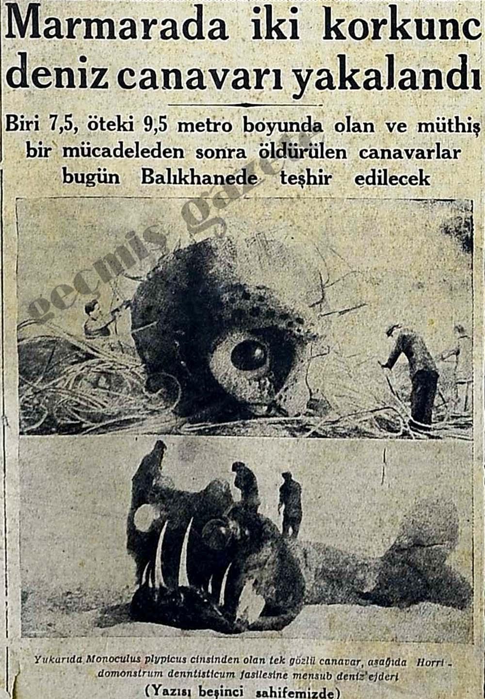 Marmarada iki korkunc deniz canavarı yakalandı