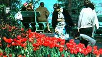 Bahar ve çiçek bayramını yarın kutluyoruz
