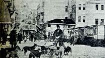 Masal olanlar: Eski sokak köpekleri