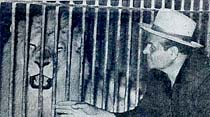 Bir İzmirli, 6 yaşındaki aslanını satılığa çıkardı
