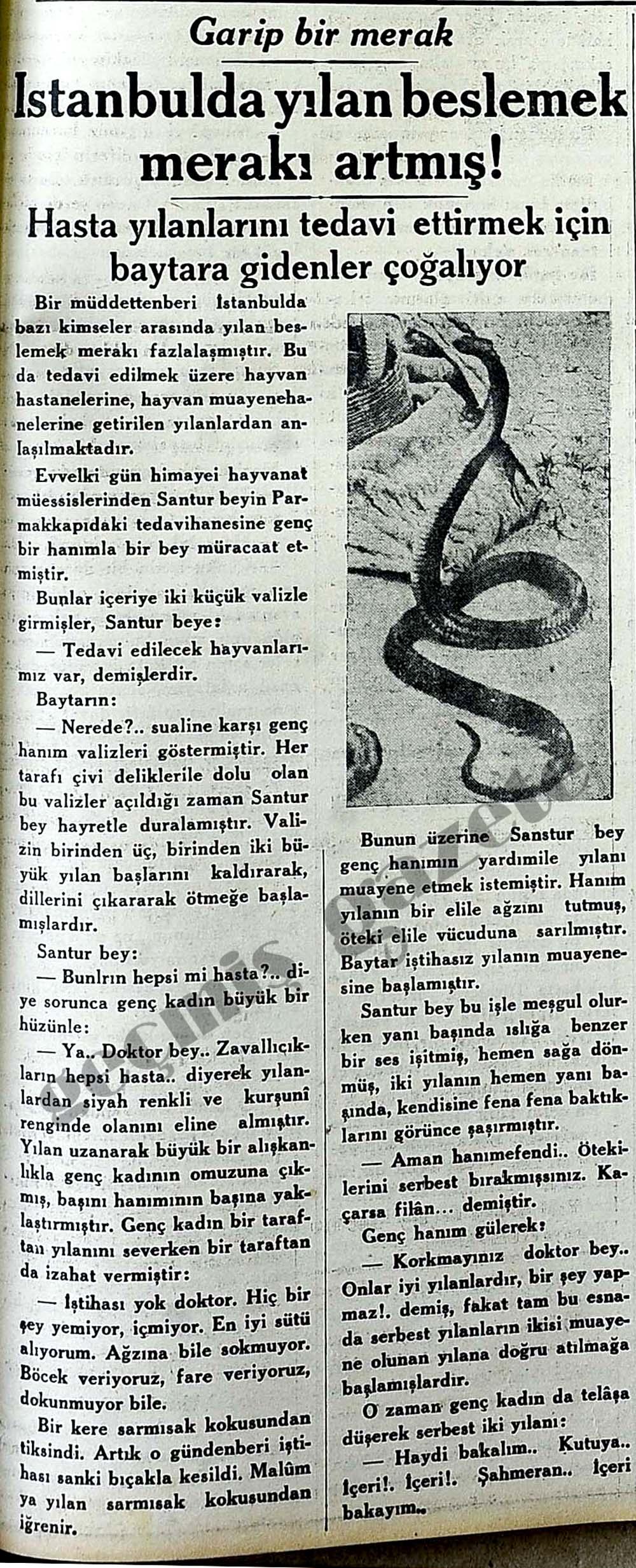 İstanbulda yılan beslemek merakı artmış!