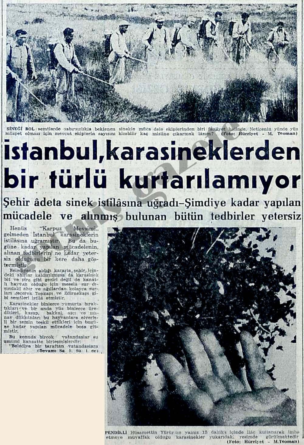 İstanbul, karasineklerden bir türlü kurtarılamıyor
