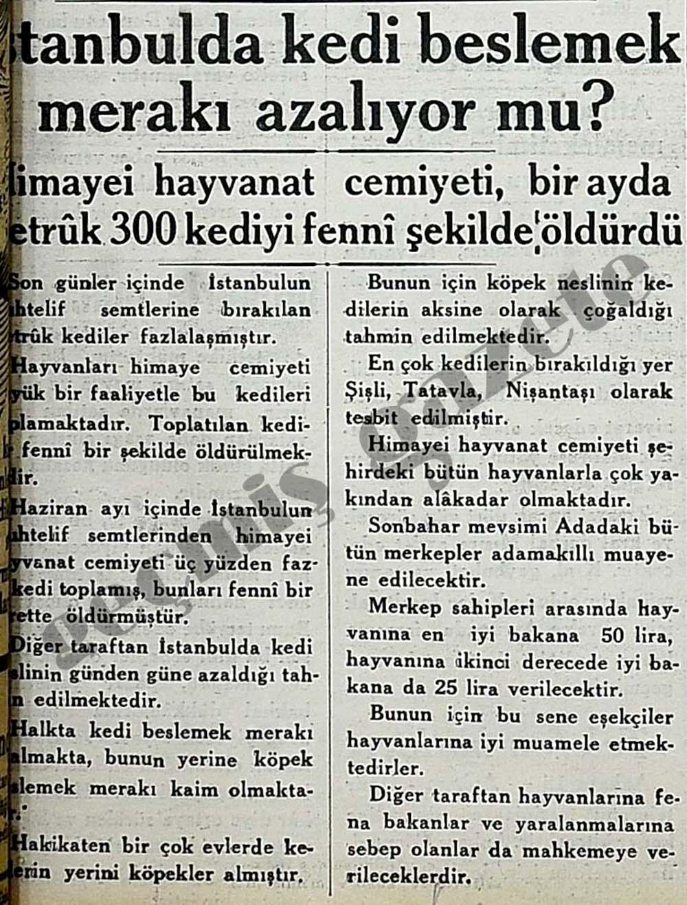 İstanbulda kedi beslemek merakı azalıyor mu?