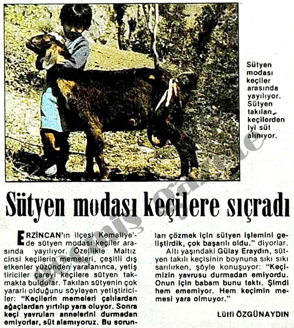 Sütyen modası keçilere sıçradı