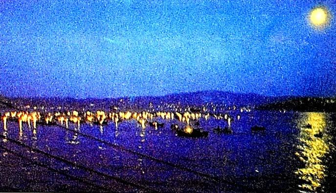 Boğaz'da bir gecede 20 bin lüfer yakalandı