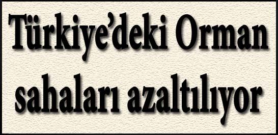 Türkiye'deki orman sahaları azaltılıyor
