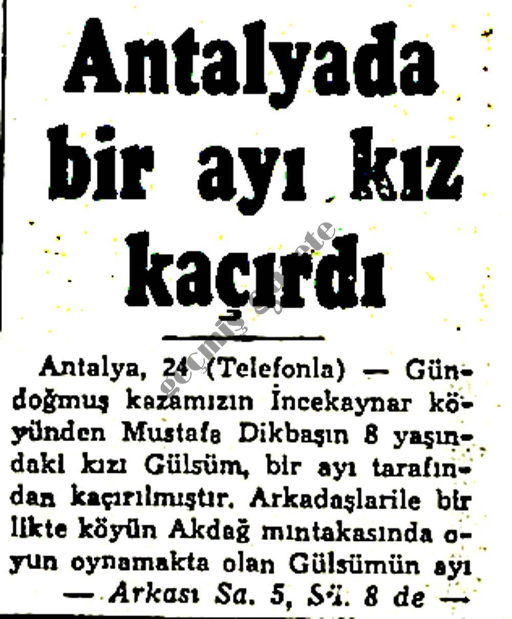 Antalyada bir ayı kız kaçırdı