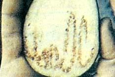 Patlıcanda Allah yazısı