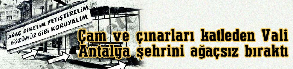 Çam ve çınarları katleden Vali Antalya şehrini ağaçsız bıraktı