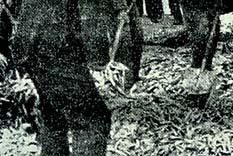 Kamyon devrilince, dökülen 8 ton hamsi balığı trafiği aksattı