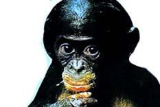 Seks düşkünü maymunlar