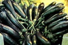 Patlıcan sigarası