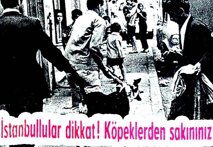 İstanbullular dikkat! Köpeklerden sakınınız